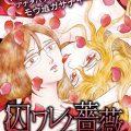 双子の姉によるドロドロな復讐劇!漫画「囚ワレノ薔薇」内容やネタバレ感想